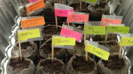 Gardening - Planted Seeds