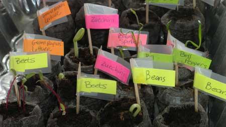 Garden - Sprouts